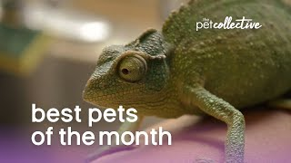 Best Pets of The Month  (June 2019) | The Pet Collective