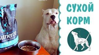 Выбор сухого корма для собак | кормление собак | сухой корм для собак