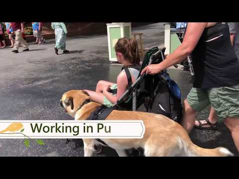 Rescue Dog Transforms into Amazing Service Dog!