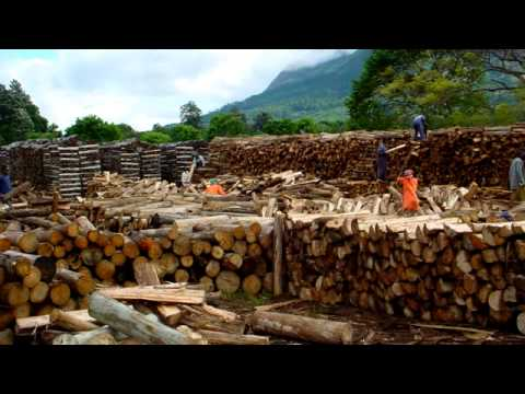 Wood Energy - Africa's Green Energy Future, A film by GTZ HERA