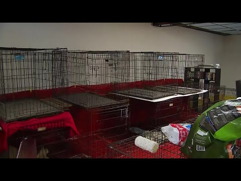 North Carolina Woman Faces Charges After Sheltering Pets During Hurricane Florence