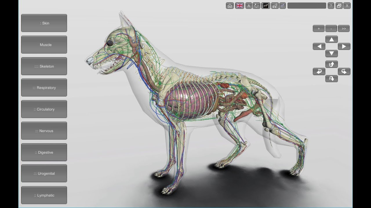 3D Dog Anatomy Software 1.93 for Desktop - YouTube