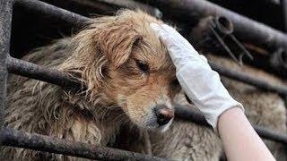 動物を愛する気持ちは万国共通。 目の前になんらかの事情で 動けなくな...