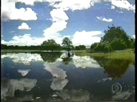 Cenas da novela Pantanal no Especial da Globo TV Ano 50. Tv Globo, 2000.