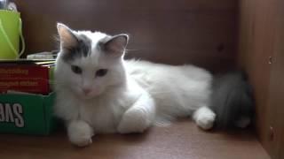 Коту Тяпе 4 года или по-человечески 35!