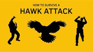 Video How To Survive A Hawk Attack