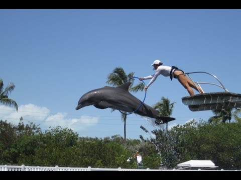 Dolphin Show at Theater of the Sea - Key Largo, FL