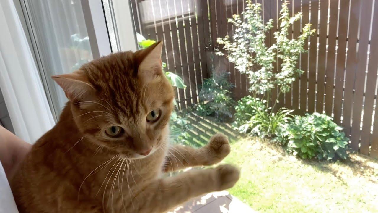 庭に登場した小鳥に大興奮の猫 A cat excited about a little bird that appeared in the garden