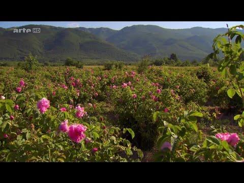La Bulgarie, le pays des roses