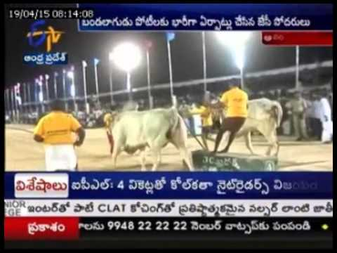 JC BRothers Introduces Oxe Races To Anantapur People, a Four Day Celebrations Completed Successfully