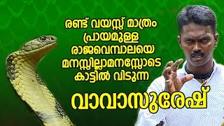 Vava Suresh releases the 2 Yr Old Long Baby Cobra in a Dense Forest | SNAKE MASTER EP 165