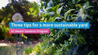 Three tips for a more sustainable yard