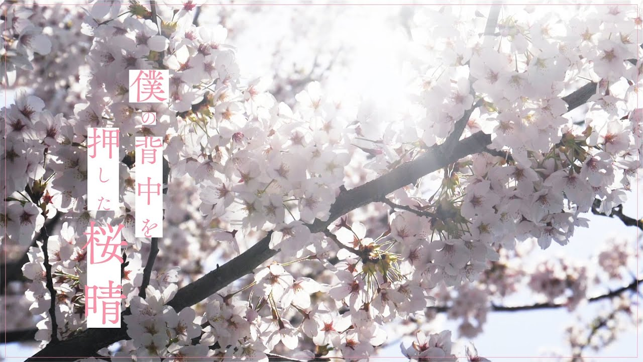 優里 『桜晴』Lyric Music Video(1コーラスver.)