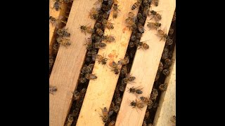 The Neonicotinoid View This Week's Buzz 01-15-2015