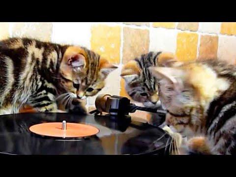 Kittens beatmakers