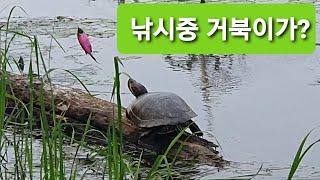 낚시 도중에 거북이가~?(붉은귀 거북) 잡을 수 있을까…