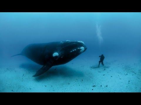 El lenguaje de las orcas
