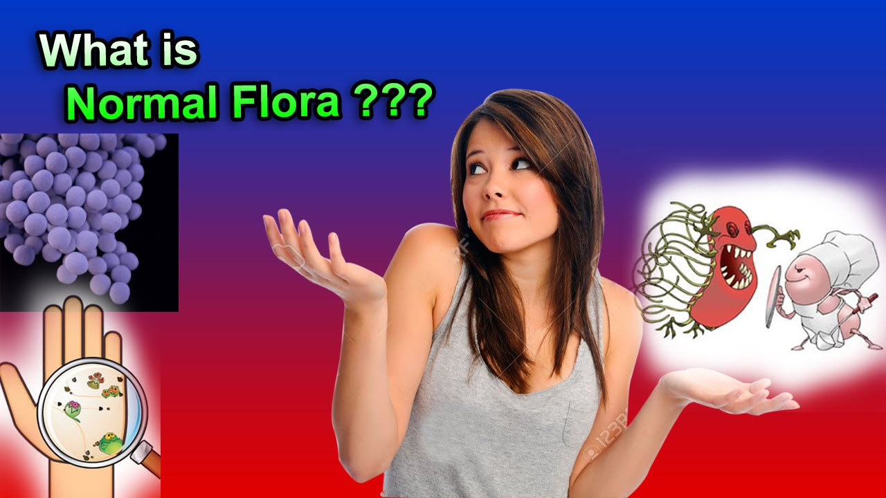 the normal bacterial flora of humans