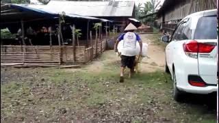 wwwBintangFarm.com: Peternakan Bebek, Ayam dan Lele