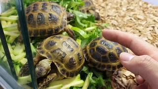 살벌한 거북이들의 위험한 식사시간