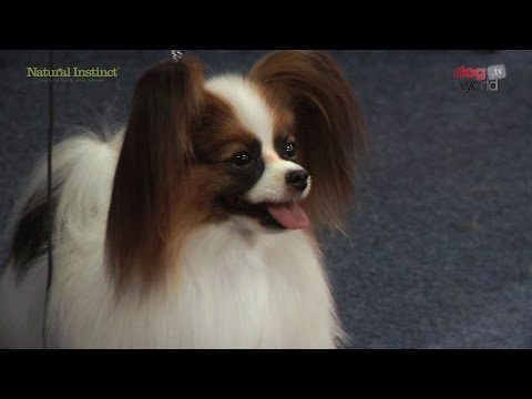 Scottish Kennel Club 2016 - Best in Show