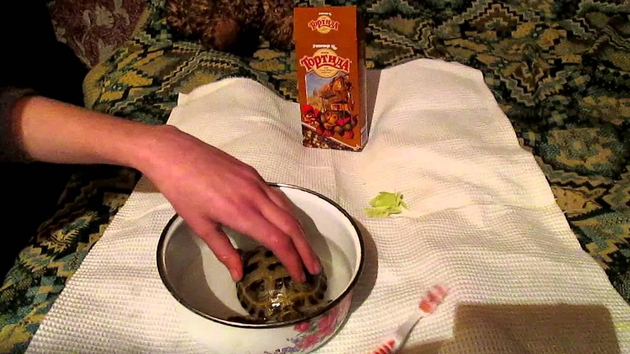 Бешеная черепаха видеоклип с музыкой фото 424-971