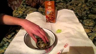 Уход за сухопутной черепахой .(Как же всё таки ухаживать за черепашкой , посмотрите это видео и вы научитесь : кормить сухопутную черепаху,..., 2013-01-10T18:54:18.000Z)