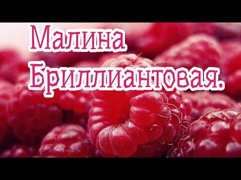 Ремонтантная малина Бриллиантовая/урожайная/крупная ягода.07.09.20г.