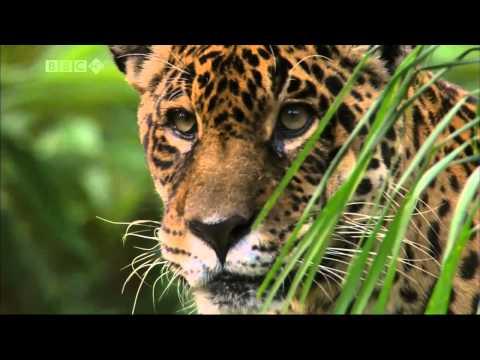 Beautiful World  Iguazu Falls - BBC Planet Earth HD