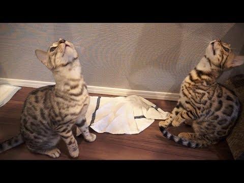 ちゃんとおすわりしてご飯を待つ2匹の猫
