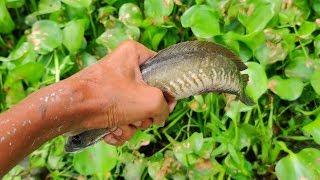 Amazing Rural Village Fishing | Catching Suckermounth Catfish and Snakehead Fish