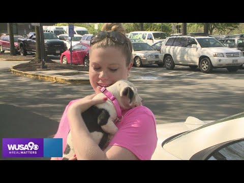 Despite COVID-19, Lucky Dog Animal Rescue continues pet adoptions thumbnail
