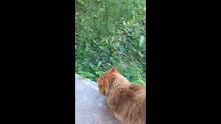 Кот идет на охоту