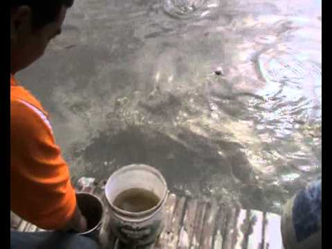 ทดสอบบ่อตกปลา อ้ายพจน์ห้วยปลากั้ง 54