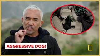 Finding What Caused this Dog's Aggression! (Better Human Better Dog Previews)