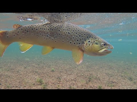 Fly Fishing South Platte - Deckers