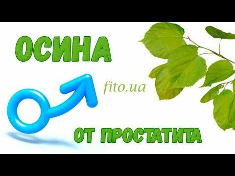 Осина: лечебные свойства и противопоказания, рецепты и как приготовить от простатита