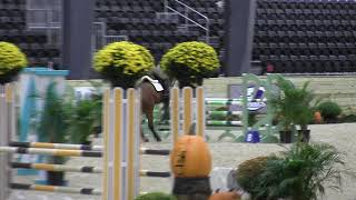 Video of CALIMERO XXVI ridden by TAYLOR REPCHICK from ShowNet!