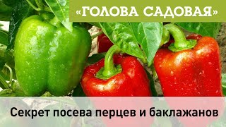 Голова садовая - Секрет посева перцев и баклажанов