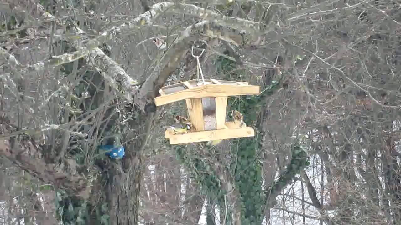 vögel am futterhaus im winter  februar 2010  kumberg bei