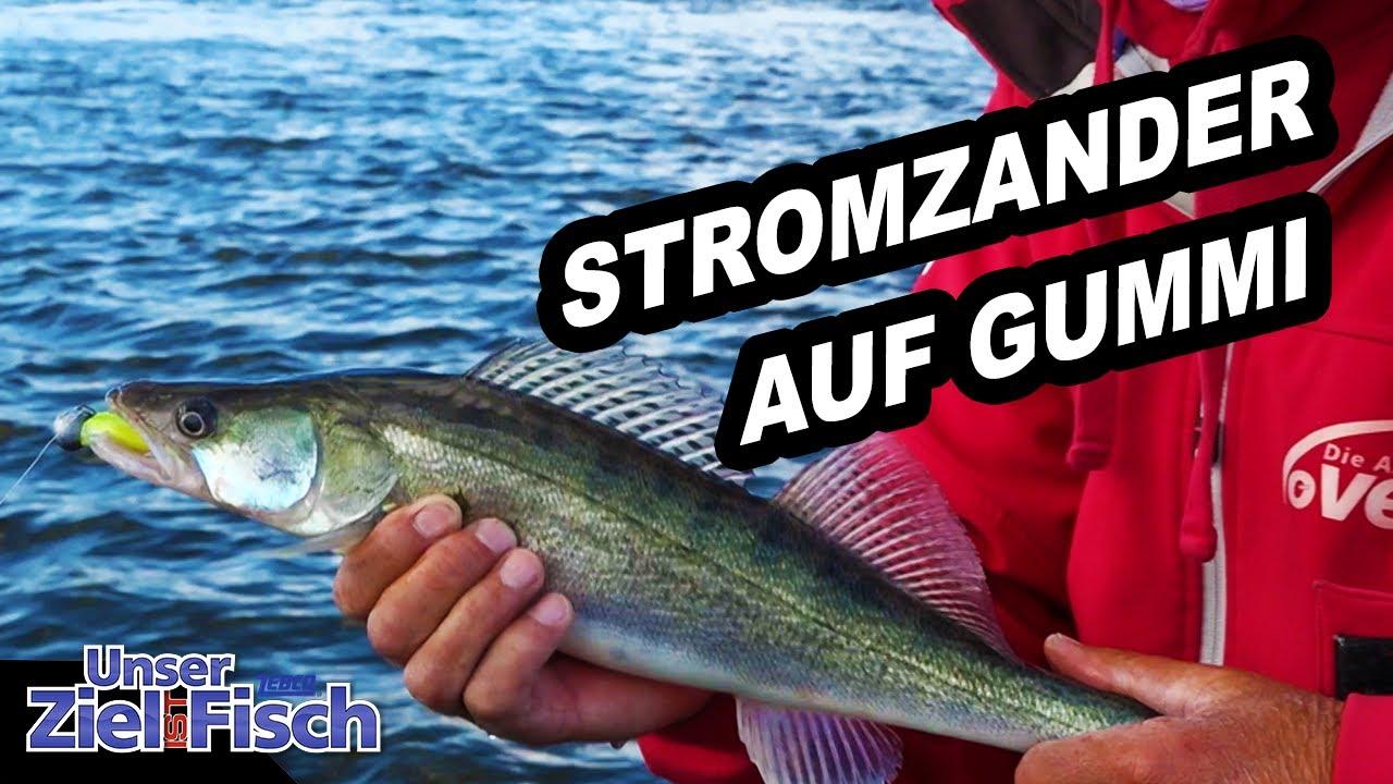 Am BUHNENKOPF auf ZANDER - Angelschule mit Gummi am STROM - Unser Ziel ist Fisch mit Jörg Ovens