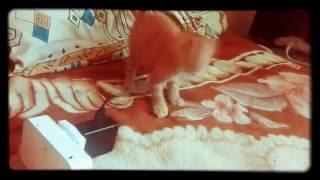 Рыжий кот. ФЕЛИКС.