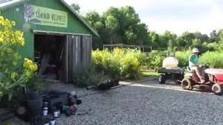 The Common Milkweed Plant Nursery