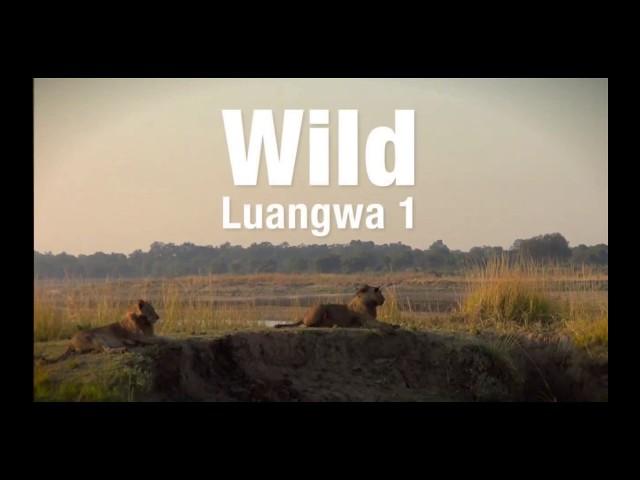 Wild Luangwa with The Bushcamp Company