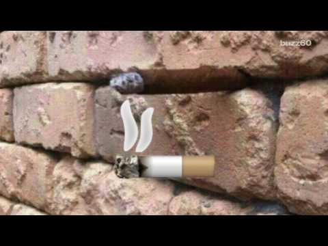 New Optical Illusion Confusing Everyone Cigar In Brick Wall Answer