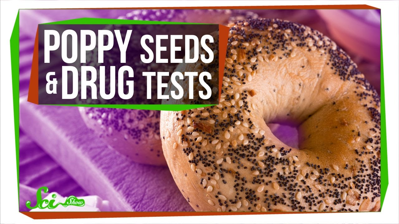 No, Poppy Seeds Probably Aren't Going to Make You Fail a Drug Test