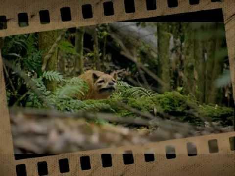 Cloning The Tasmanian Tiger Part 3 Final Youtube