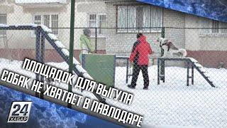 Площадок для выгула собак не хватает в Павлодаре