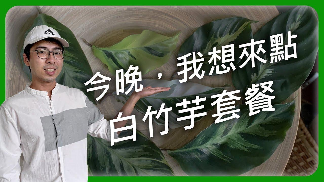 竹芋第二集 #白竹芋家族 |女王竹芋|大理石竹芋|黃裳竹芋|油畫竹芋|皇帝竹芋  | 宅栽