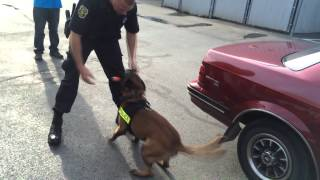 Police K9s at Adopt-A-Palooza presented by Sweeney Chevrolet Buick GMC